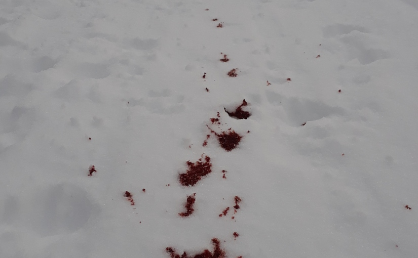 Blood On TheTrail